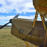 Tiger Moth Flights